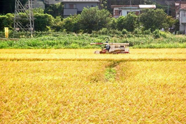riceharvest